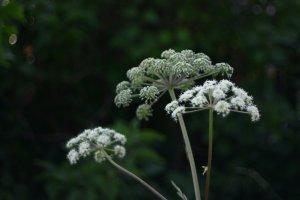 Huidreactie na tuinieren. Denk aan fytofotodermatitis!